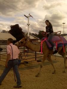 Ride a Camel (September 2011) / Photo Credit: Andrew Najjar